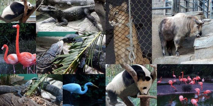 San Diego Zoo Collage # 3 by SJF Communications