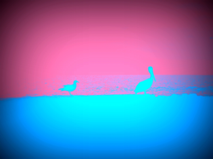 Pelican with Seagull, Edited with Picasa