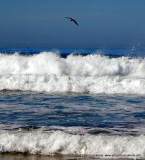 Torrey Pines State Beach;SJF Communicationswww.sjfcommunications.com