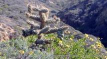 Cactus at Torrey Pines State Reserve
