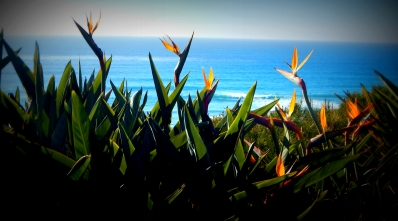 Flowers on our Encinitas Stroll; Photos: SJF Communications