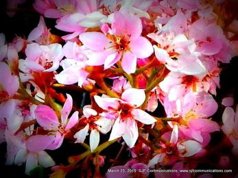 Spring has Sprung! Torrey Pines State Beach & Flowers