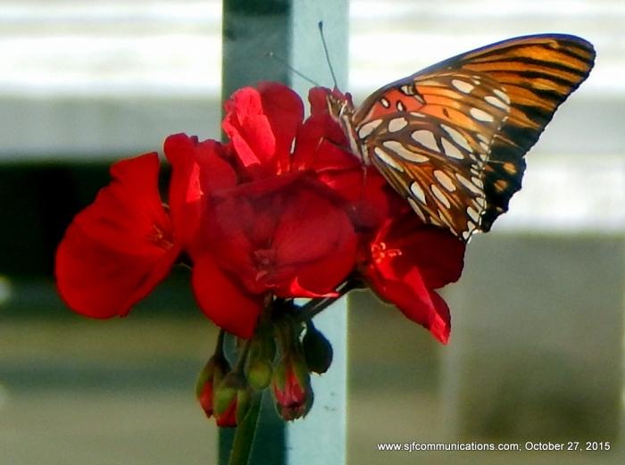 3-monarch2