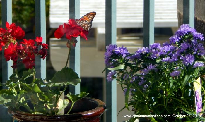 4-monarch1