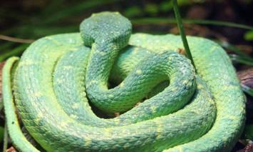 sdzoo.snake.1