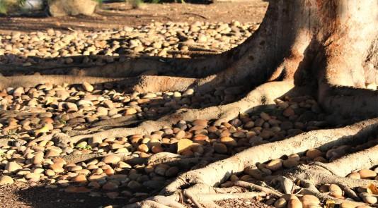 treeroot.IMG_5818